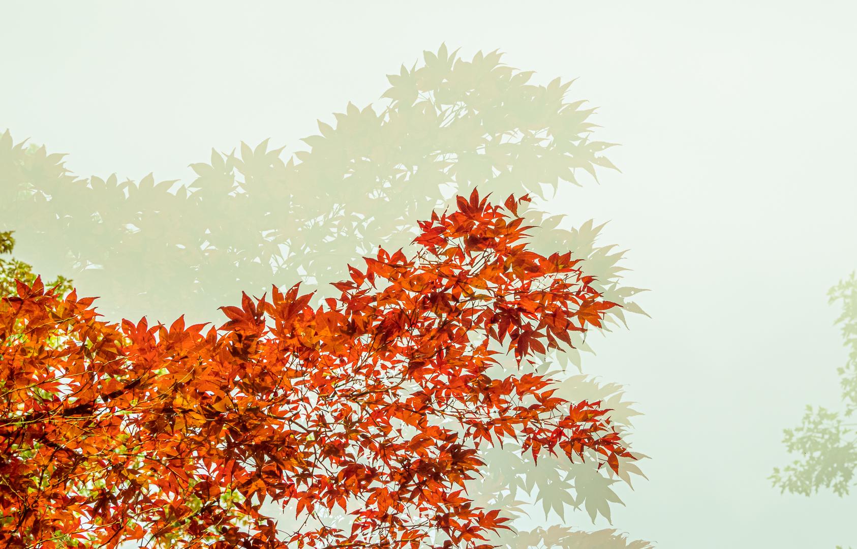 De boom en zijn schaduw