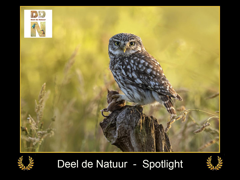 DDN Spotlight FB 29-04-2021