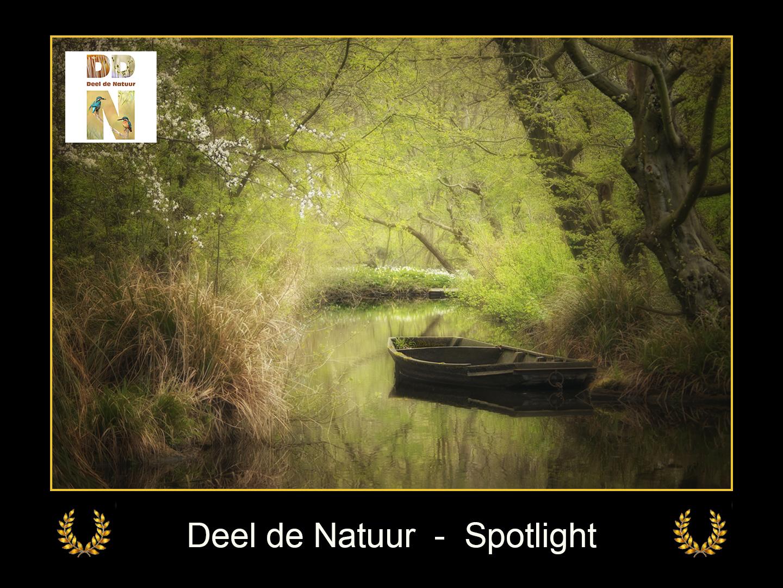 DDN Spotlight FB 04-05-2021