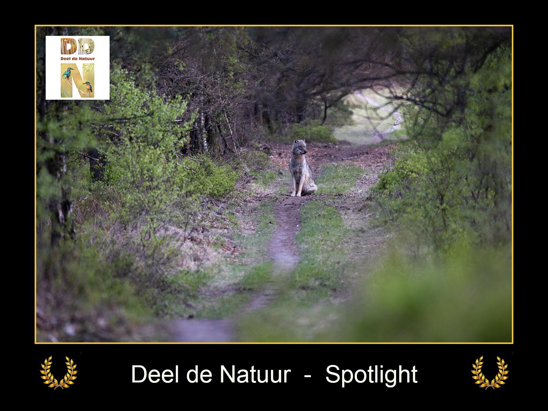 DDN Spotlight FB 13-05-2021