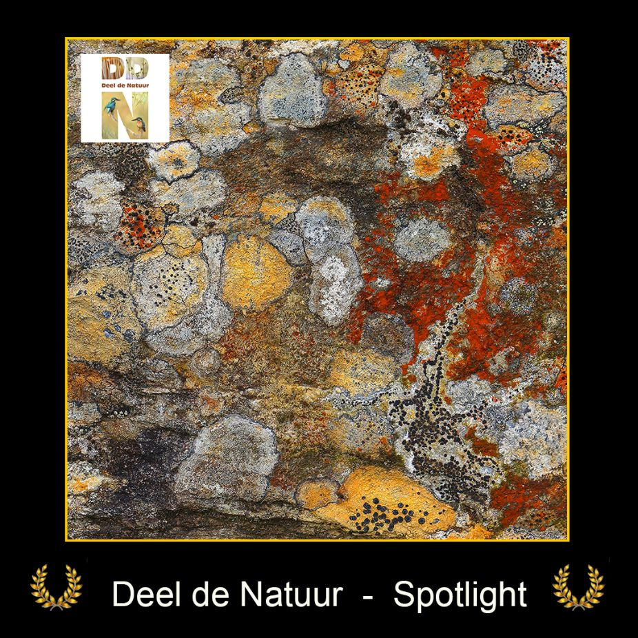 DDN Spotlight FB 03-06-2021
