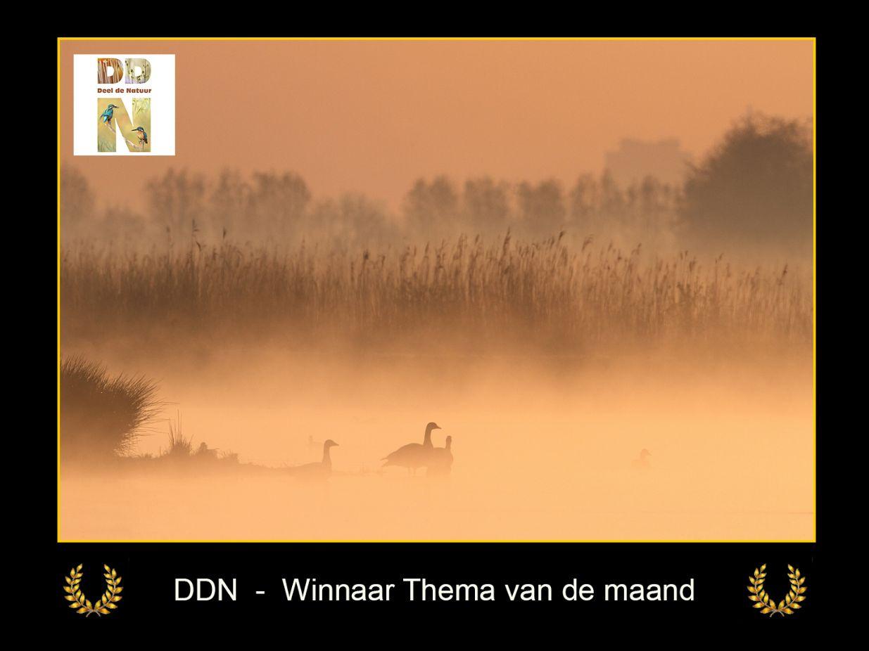 DDN Winnaar maanthema FB 05-2021