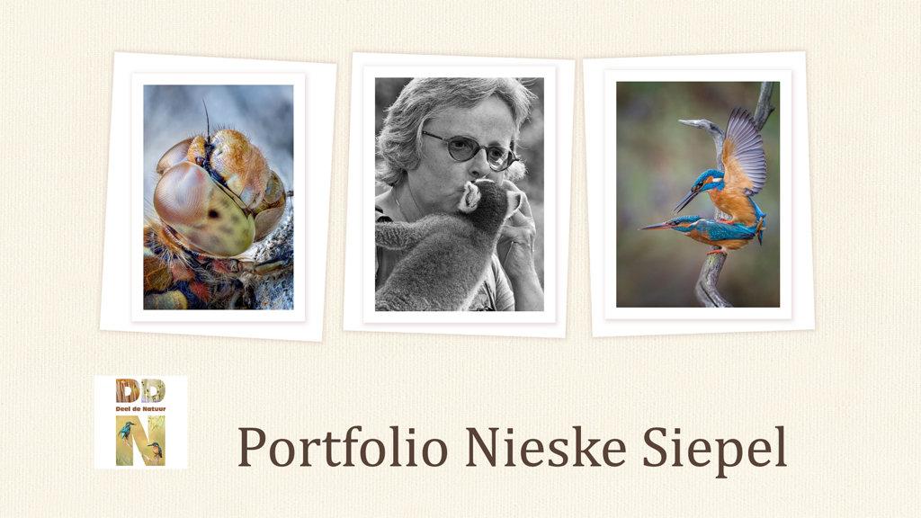 Portfolio NIeske