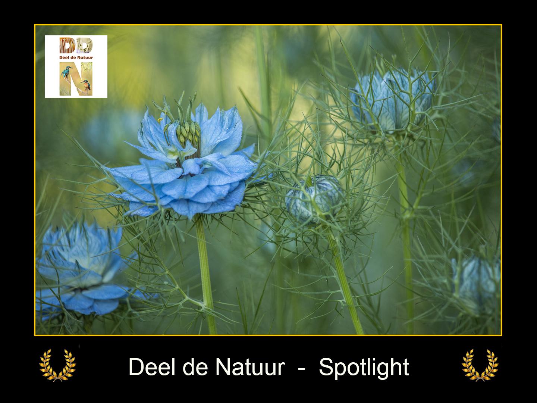 DDN Spotlight FB 10-06-2021