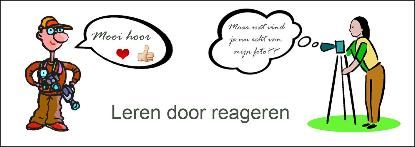 Leren door reageren