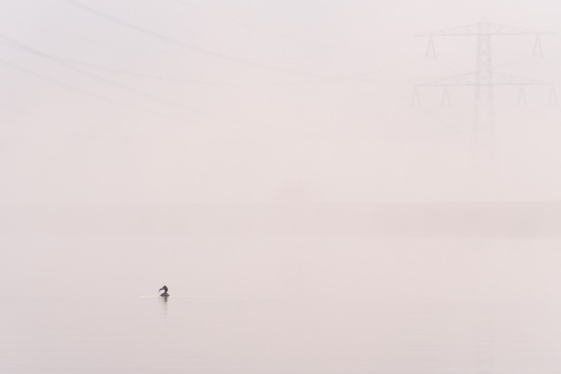 Fuut in de mist