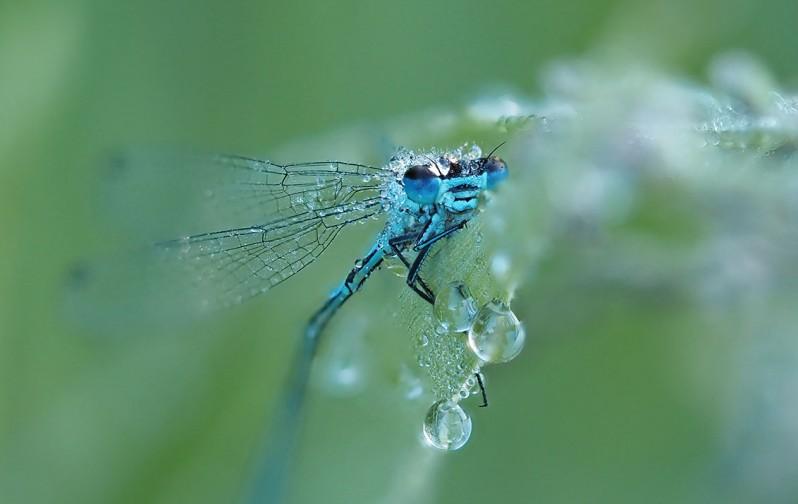 Variabele waterjuffer