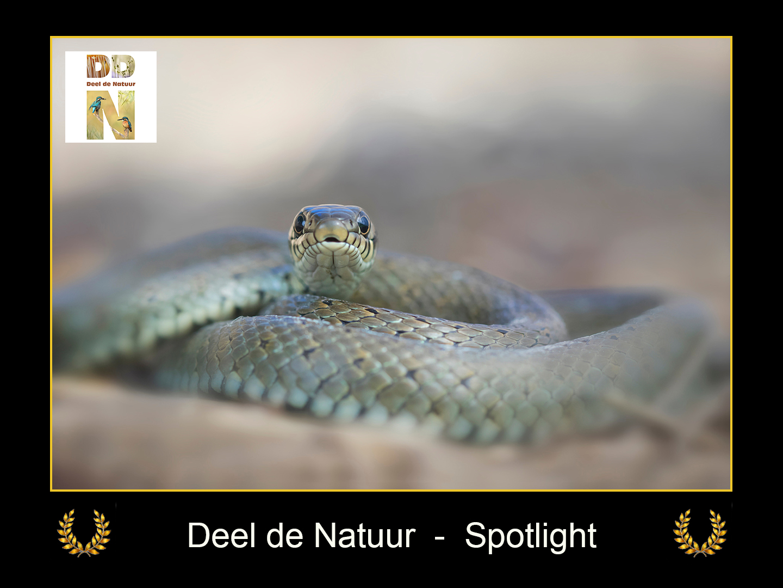 DDN Spotlight FB 17-06-2021