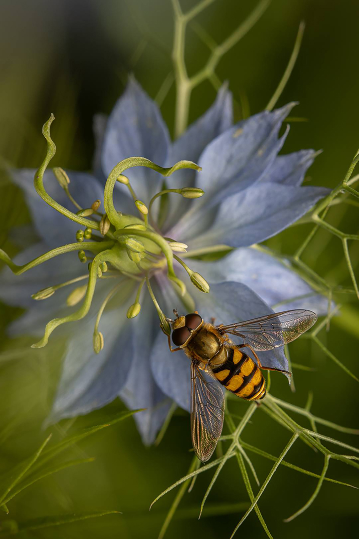 Flower and insect