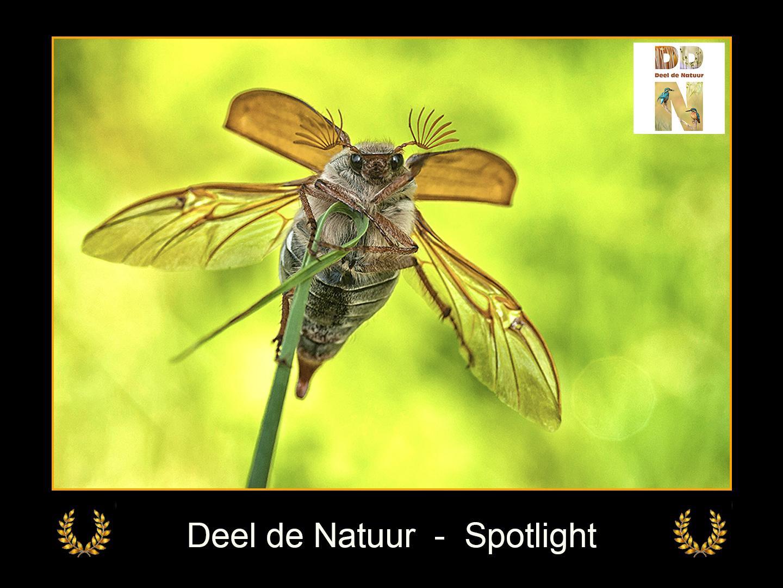 DDN Spotlight FB 24-06-2021