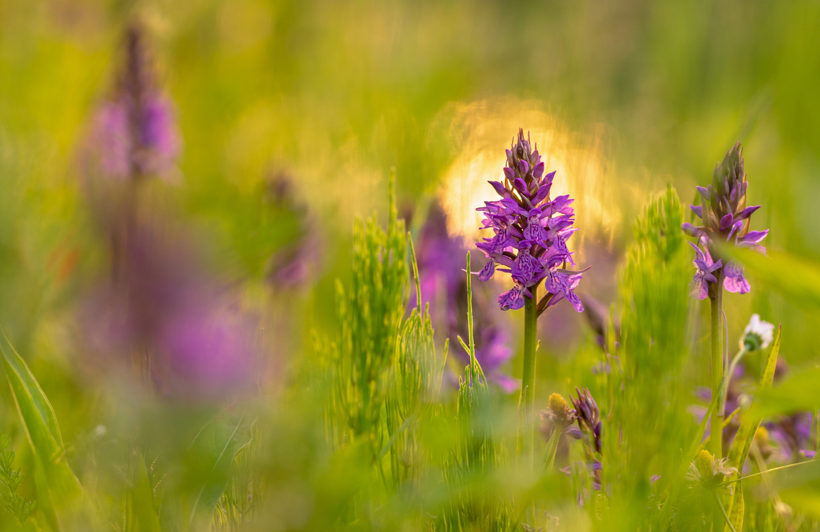 orchidee in de zon
