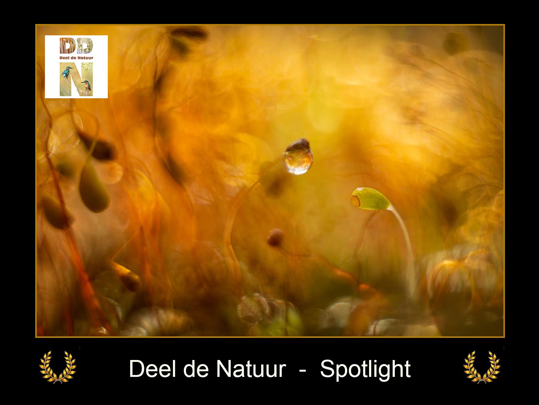 DDN Spotlight FB 27-06-2021