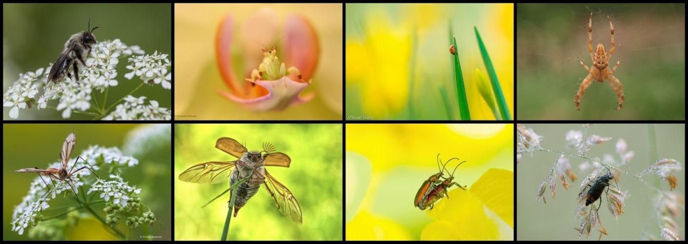 Thema van de maand juli - Kriebelbeestjes
