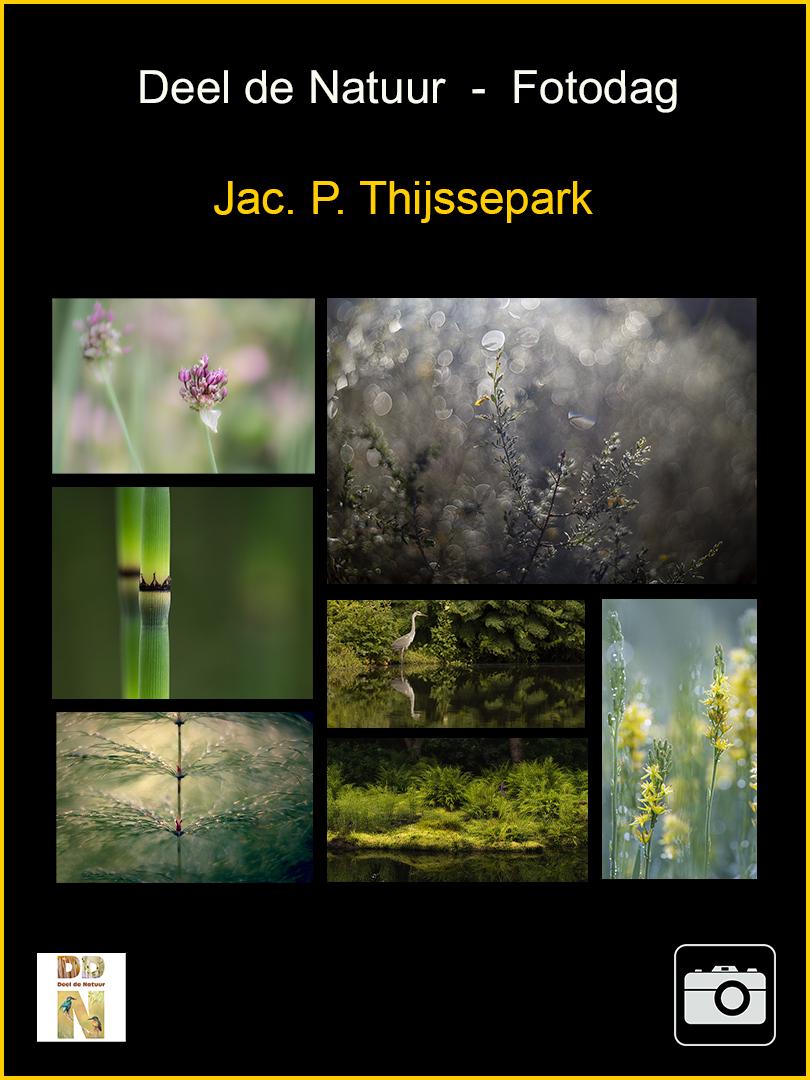 DDN Spotlight Fotodagtocht Jac.P.Thijssepark v2
