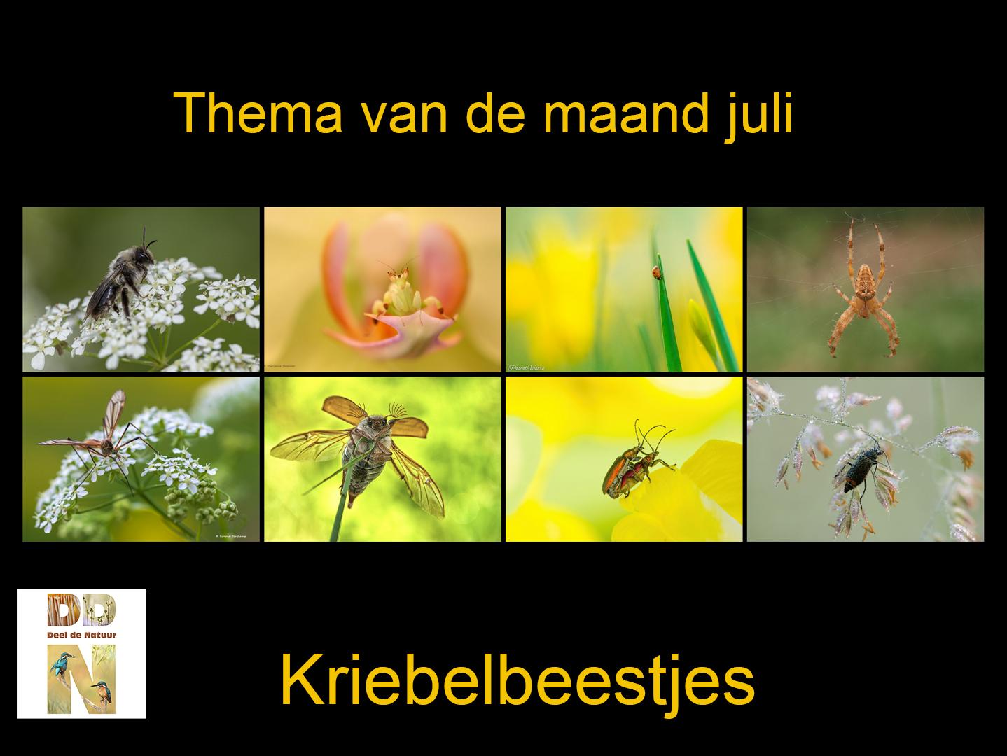 Thema van de maand - kriebelbeestjes - Spotlight