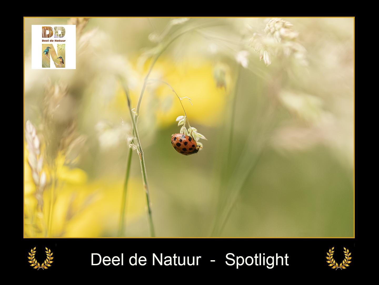 DDN Spotlight FB 13-07-2021