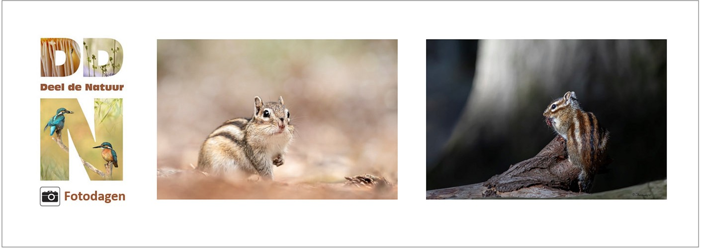 DDN fotodag - Siberische grondeekhoorns  -  VOL
