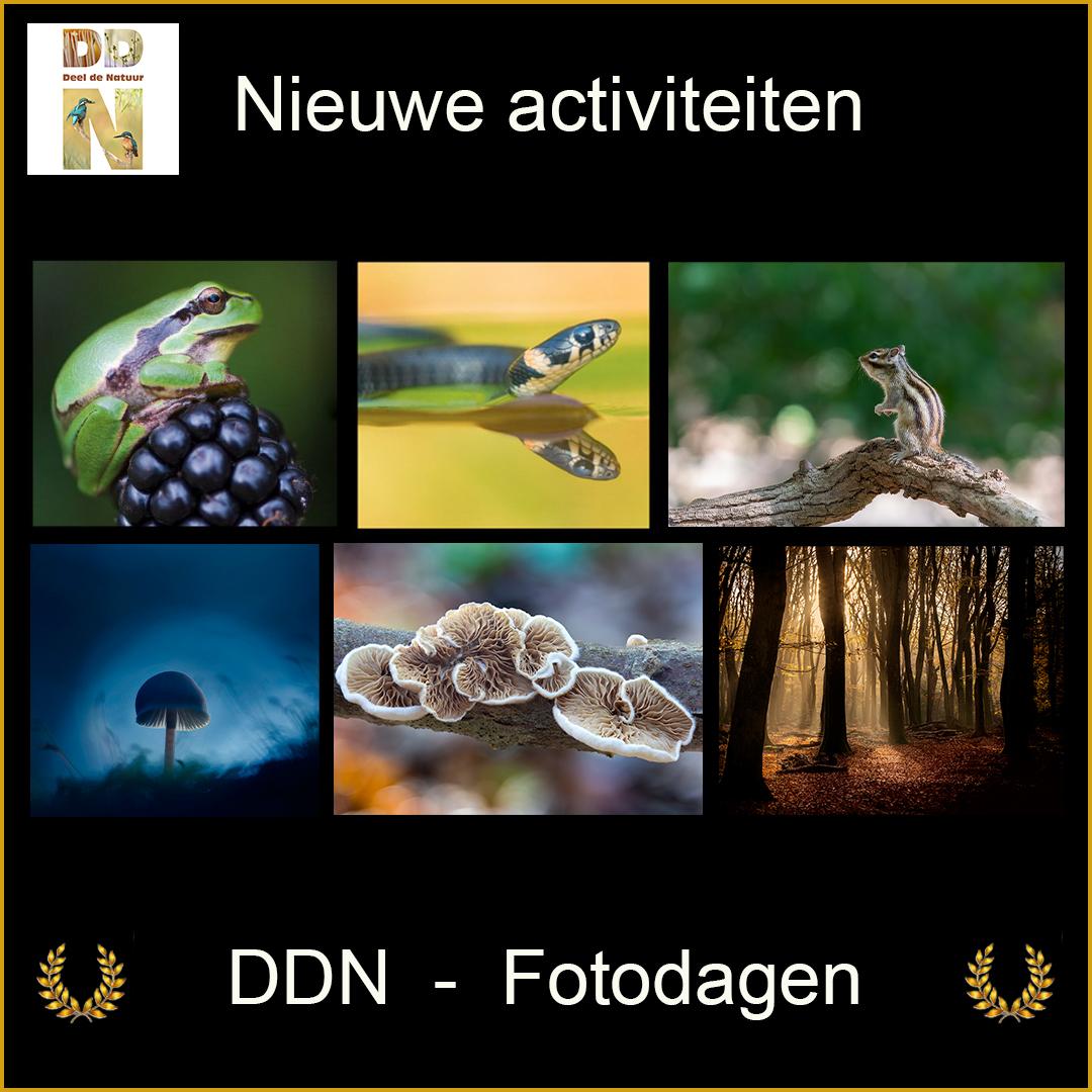 DDN Spotlight FB vierkant Teaser fotodagenv3