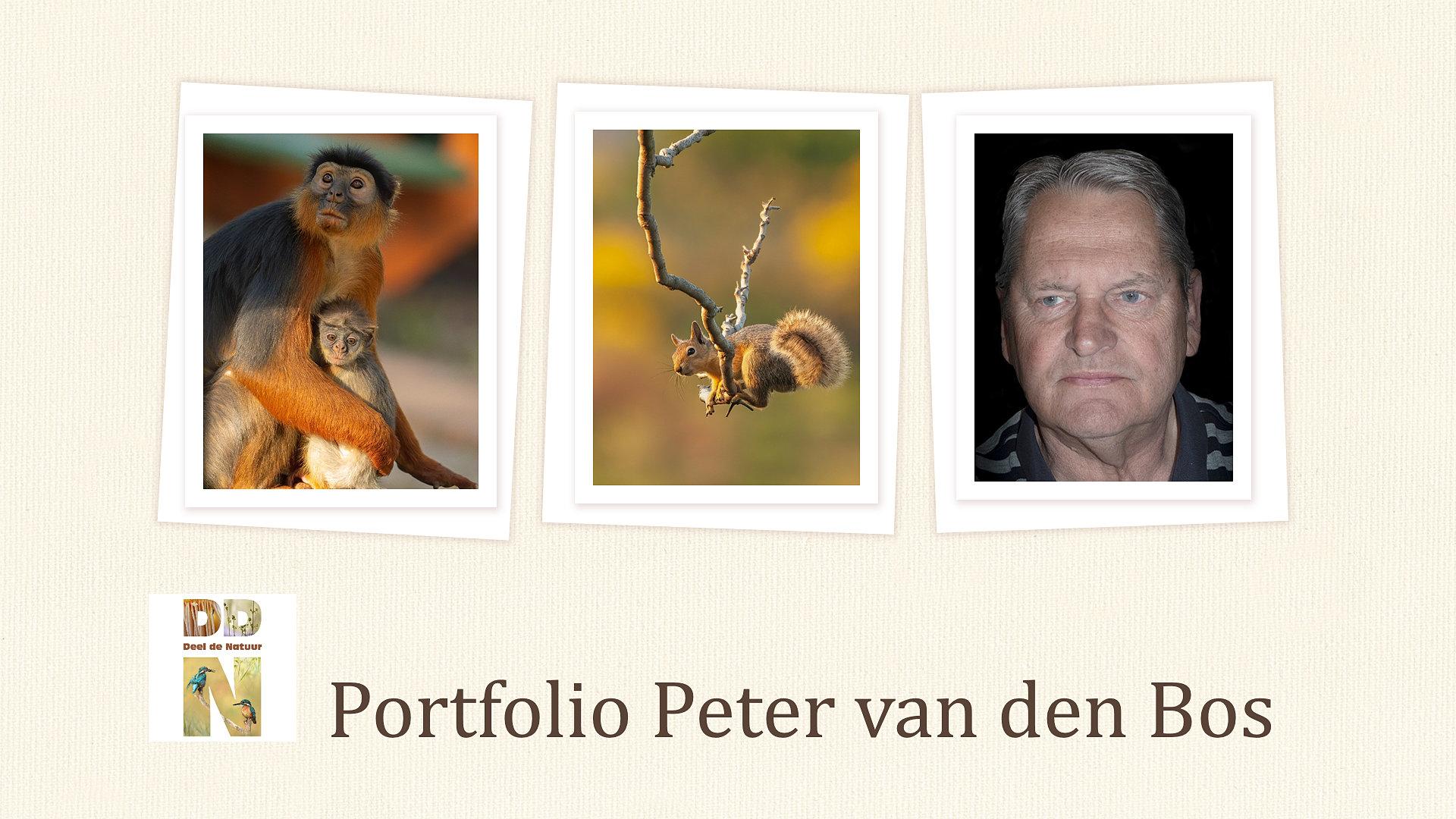 Spotlight portfolio Peter van den Bos