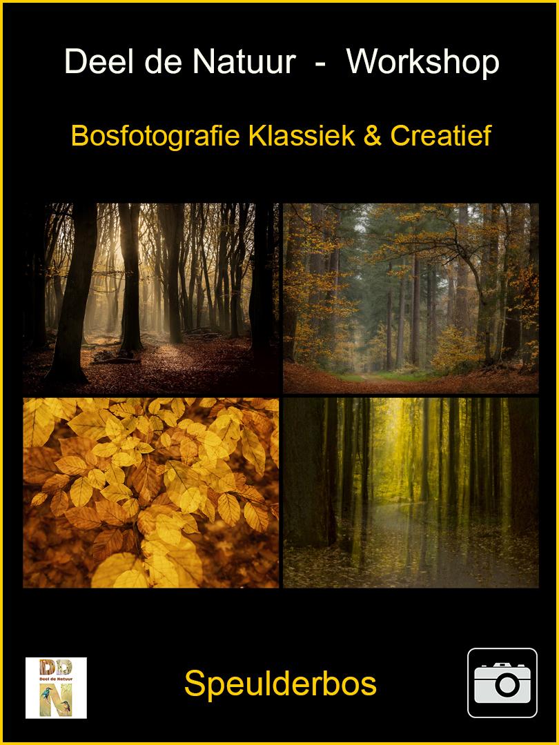 DDN Spotlight Workshop bosfotografiev2