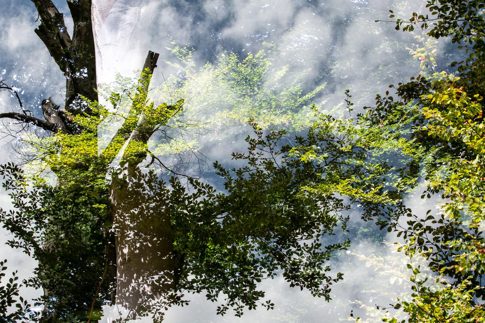 Betoverd door het bos