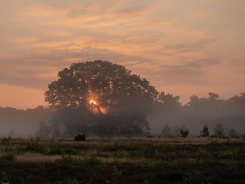 zonsopkomst met nevel