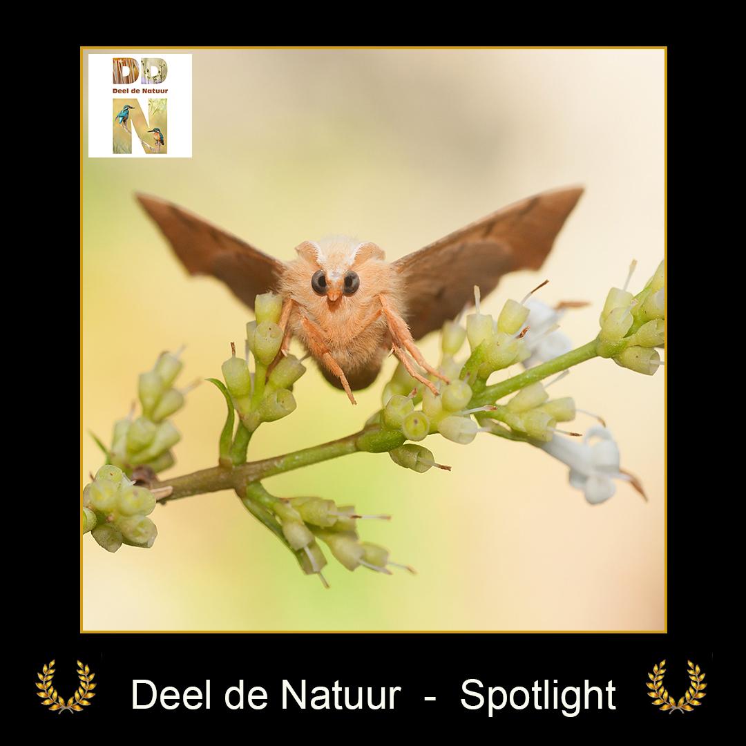 DDN Spotlight FB 25-07-2021