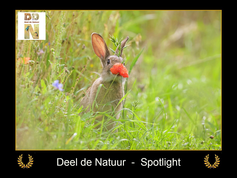 DDN Spotlight FB 29-07-2021