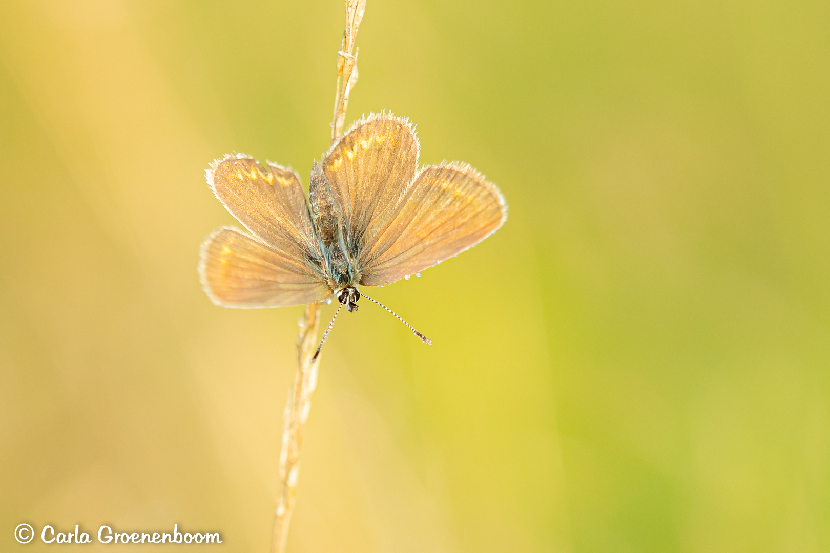 vlinder aan het opwarmen