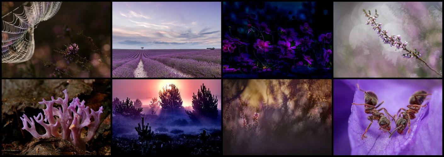 Thema van de maand augustus - 50 tinten paars