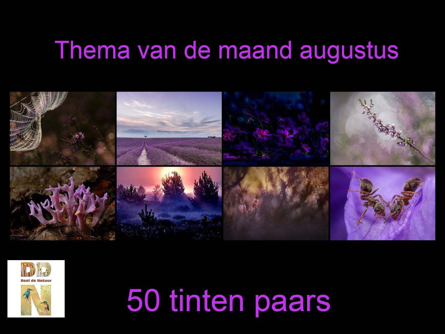 Thema van de maand - 50 tinten paars - Spotlight v2
