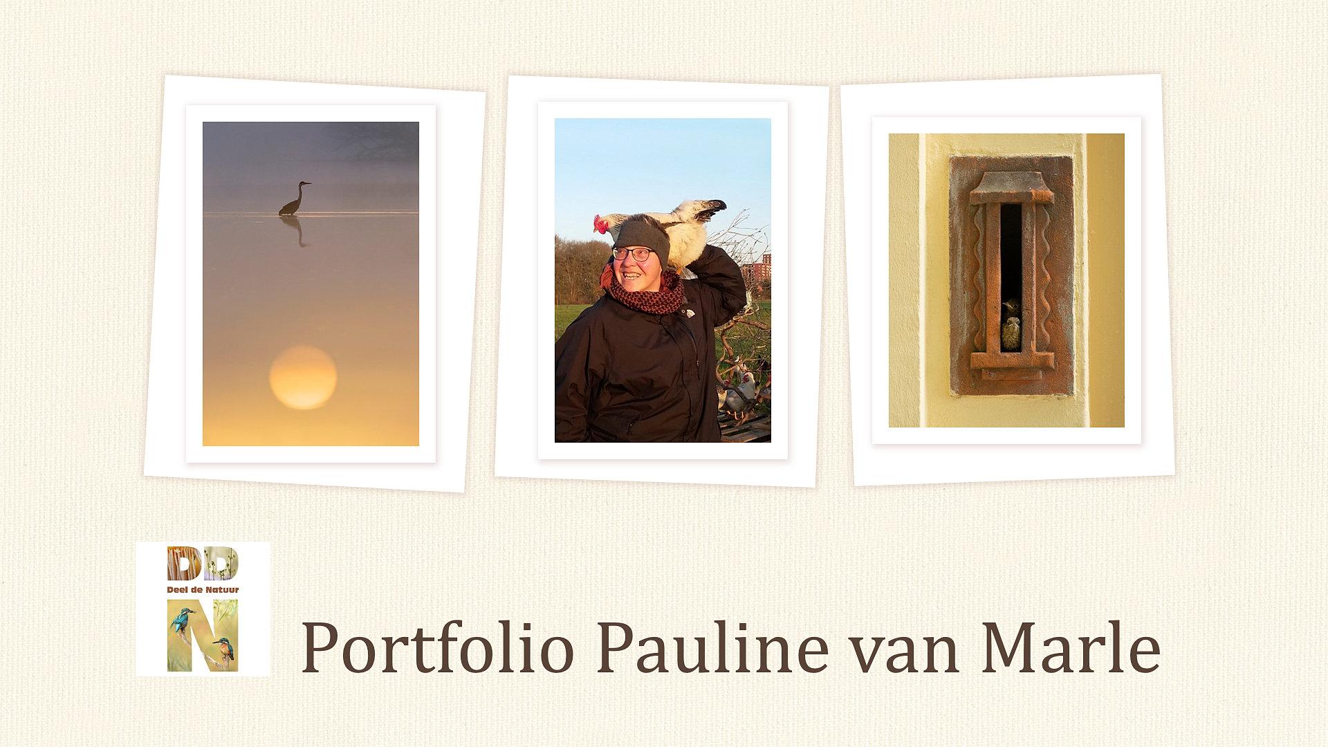 Portfolio Pauline van Marle Spotlight