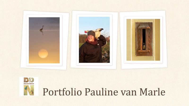 Portfolio Pauline van Marle
