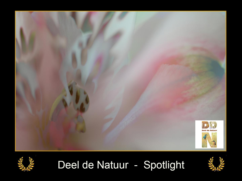 DDN Spotlight FB 09-08-2021