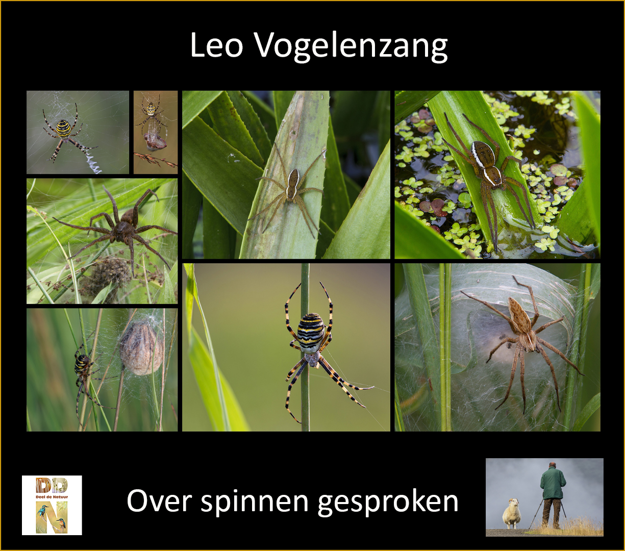 Leo Vogelenzang - Over spinnen gesproken Spotlight