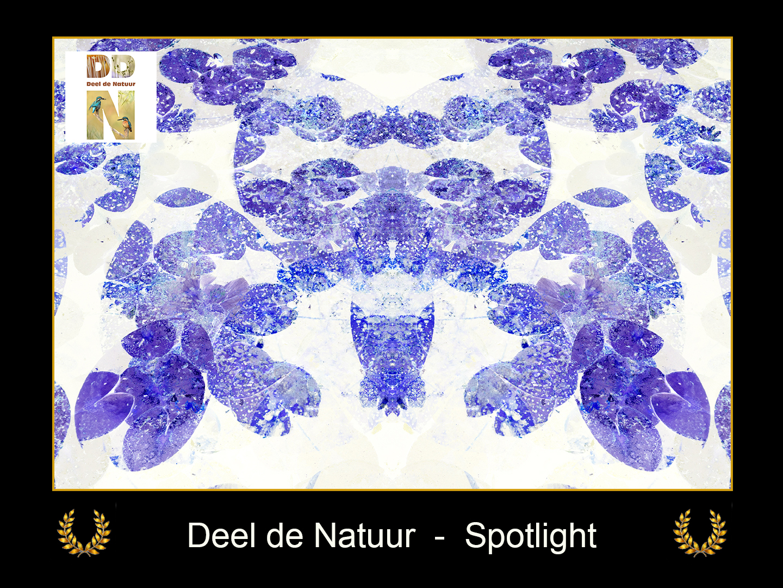 DDN Spotlight FB 15-08-2021