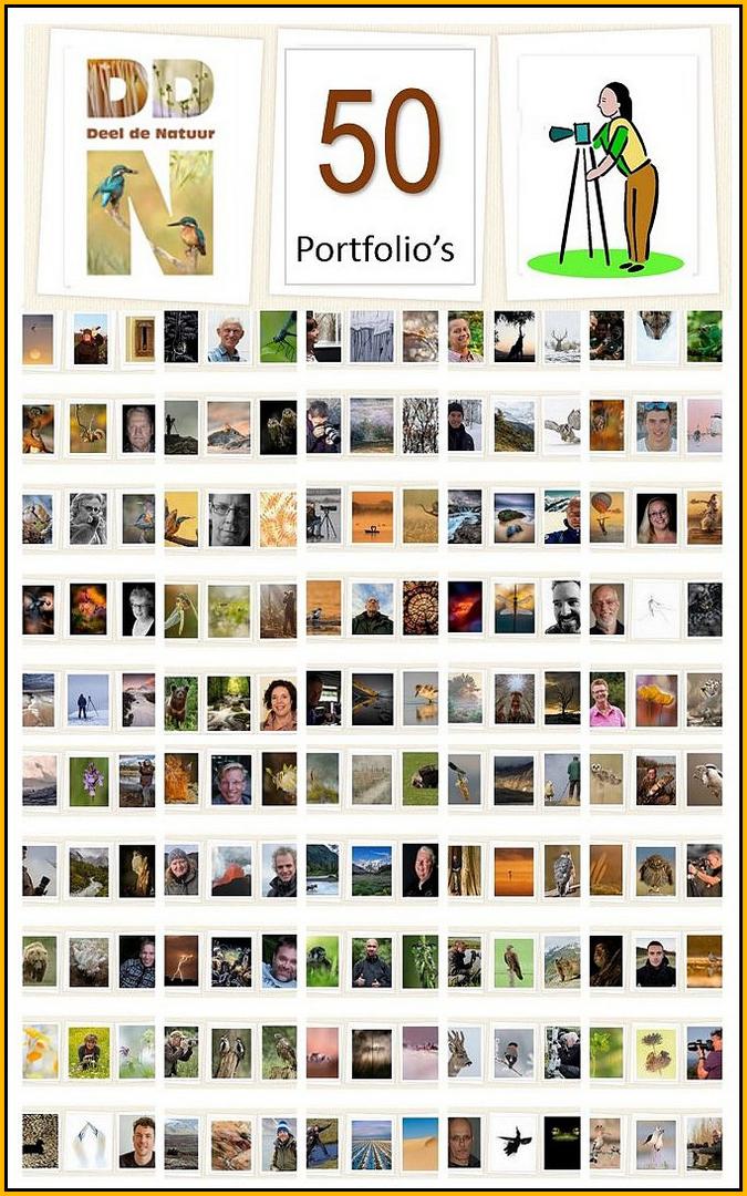 50 portfolio's