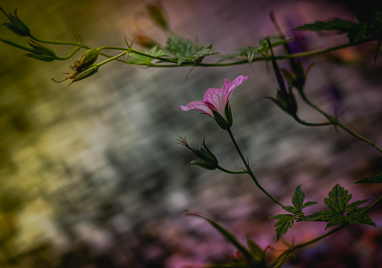 Memories of Nature