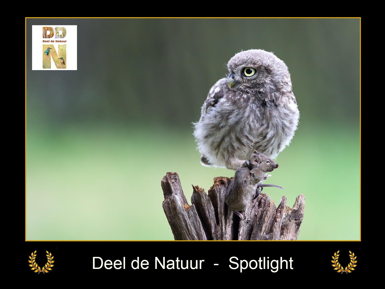 DDN Spotlight FB 30-08-2021