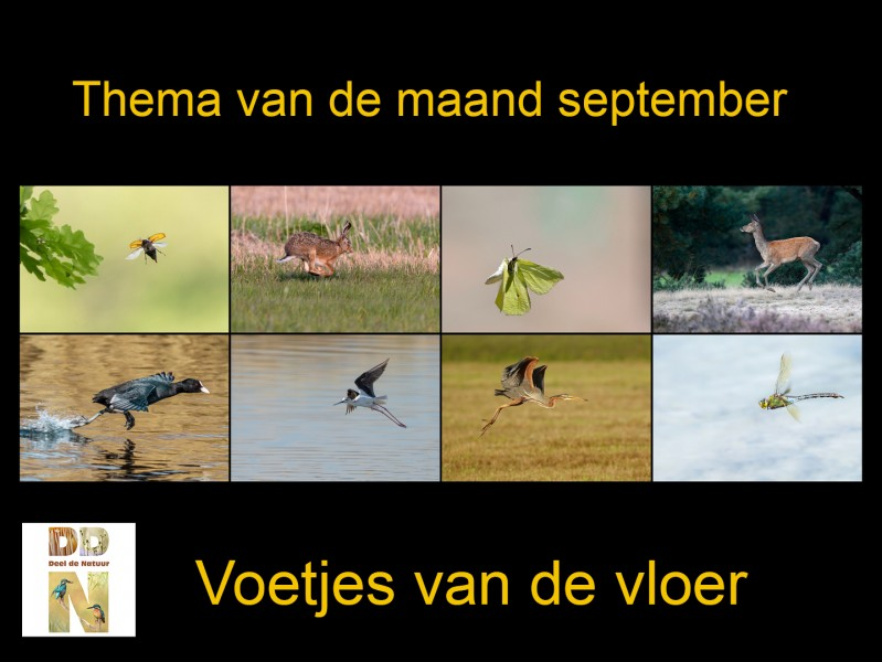 Thema van de maand september 'Voetjes van de vloer'