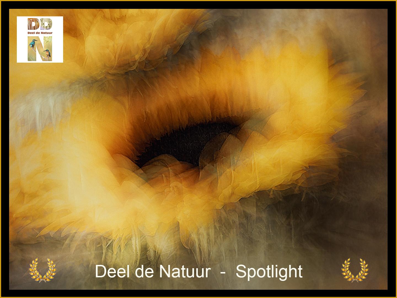 DDN Spotlight FB 02-09-2021 A