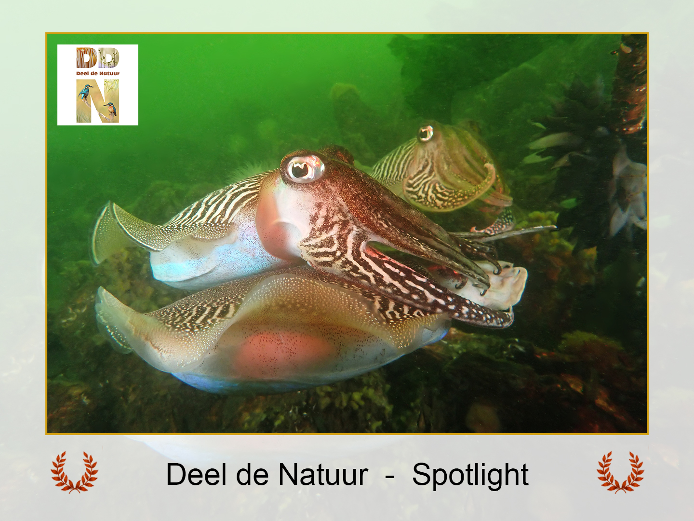 DDN Spotlight FB 08-09-2021 A