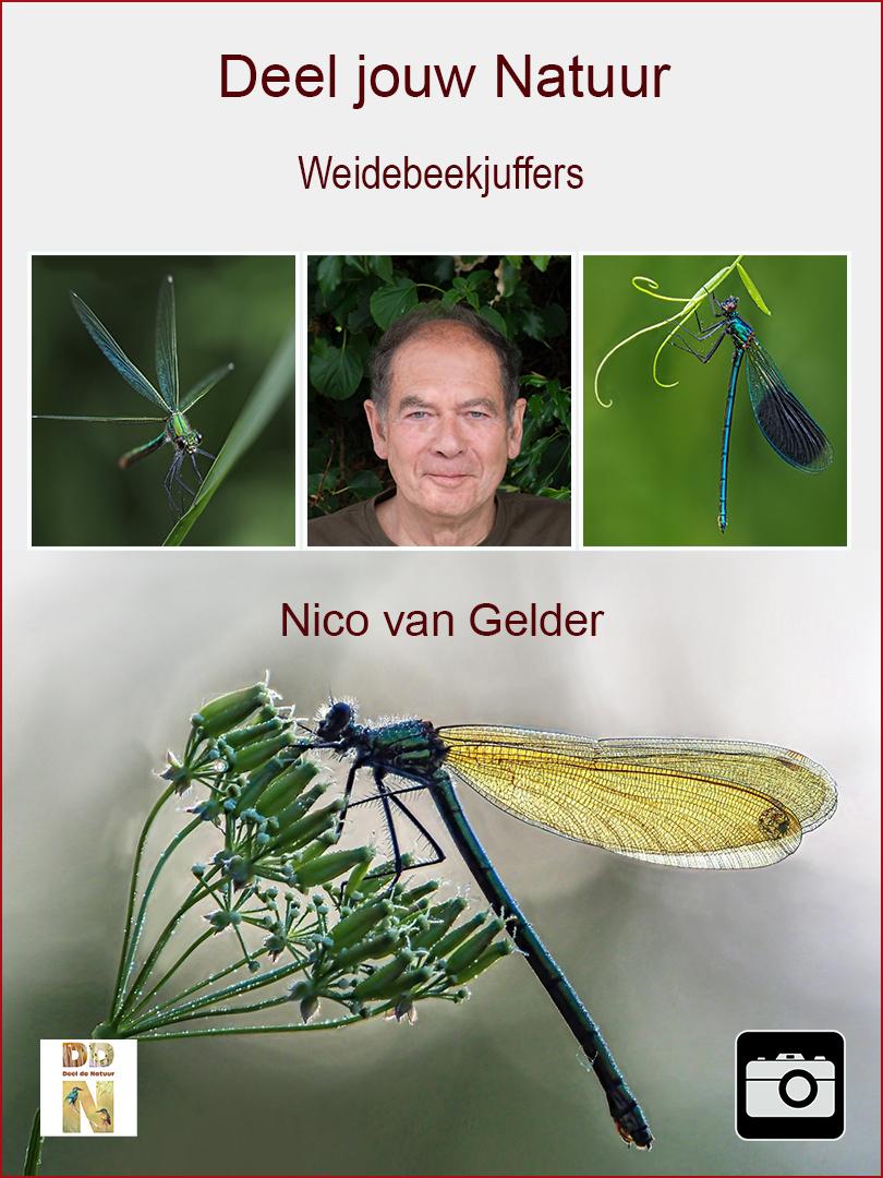 Nico van Gelder - Weidebeekjuffers spotlight