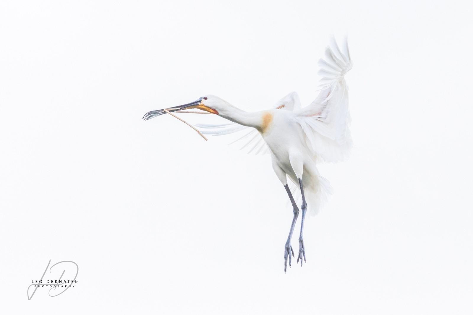 vogels-3514 L