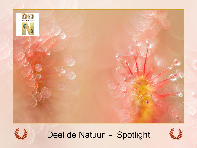 DDN Spotlight FB 22-09-2021