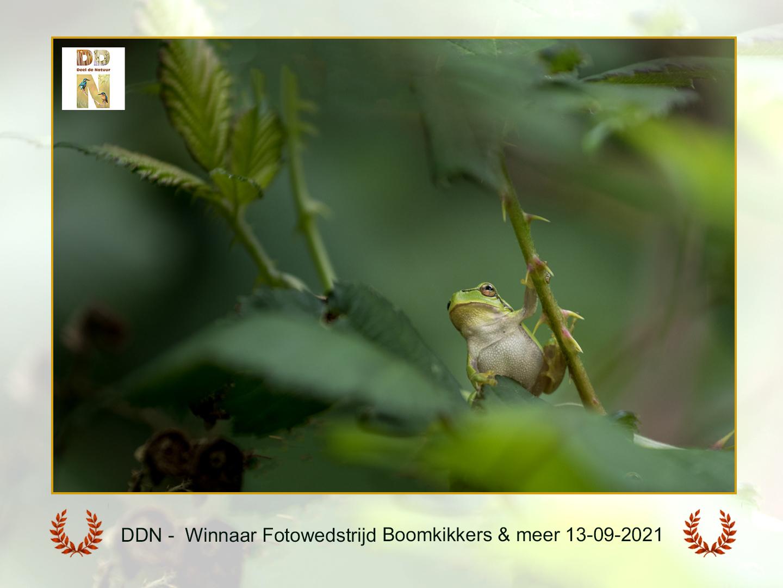 DDN Winnaar Boomkikkers en meer l13-09-2021 A