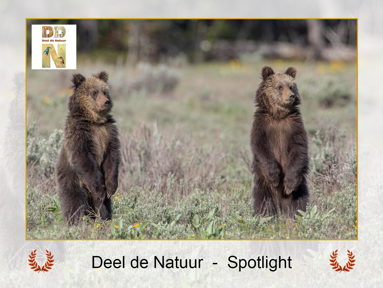 DDN Spotlight FB 10-10-2021