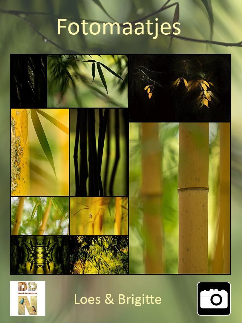 DDN Spotlight Fotomaatjes 004 v2