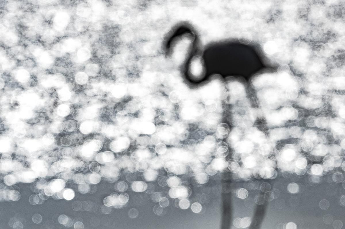 Charcoal flamingo