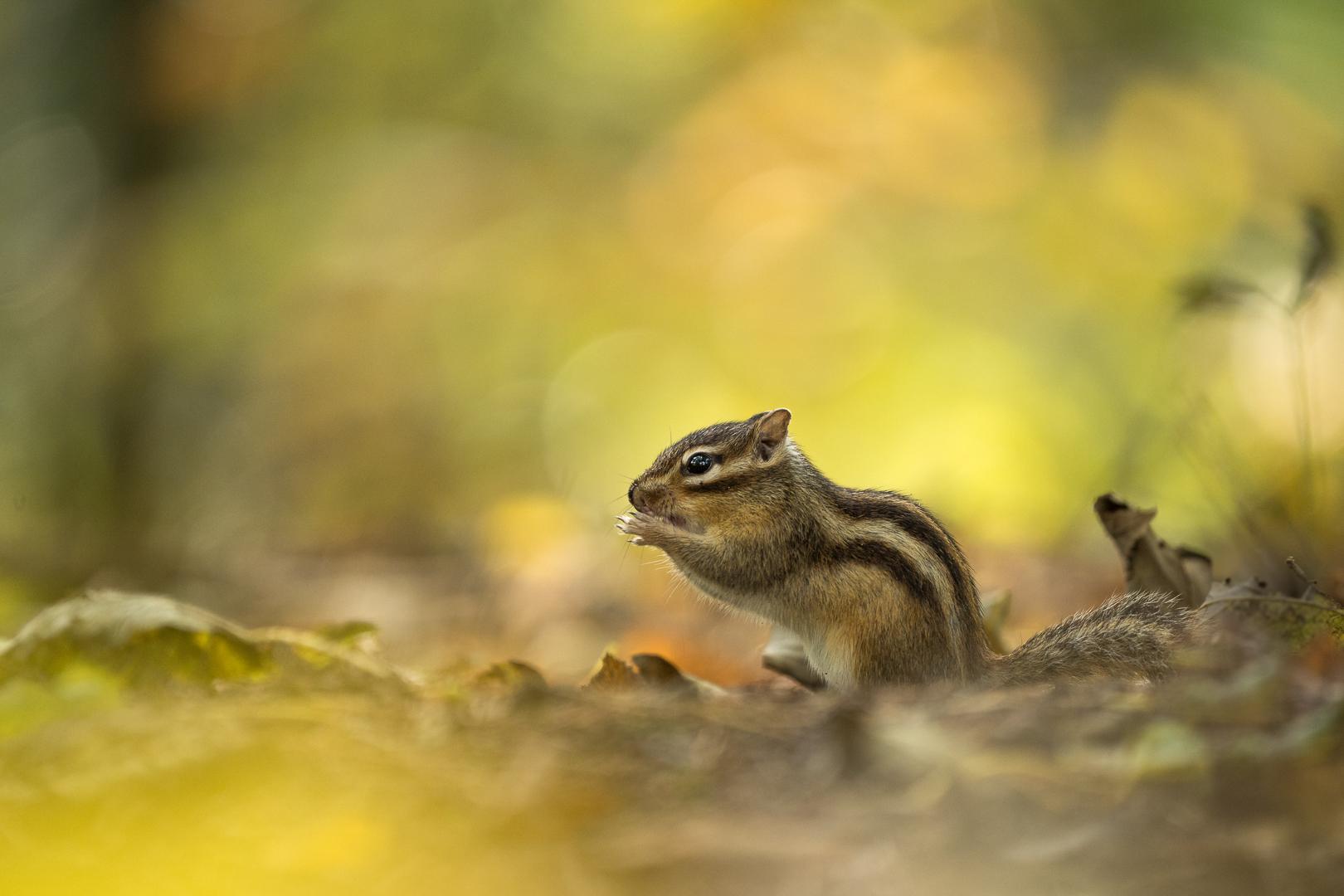 Siberische grondeekhoorn, DDN fotodag, Deel de Natuur fotodag, Loes Belovics